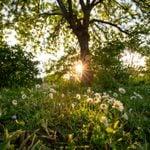 9 Ideas for Rewilding Your Yard