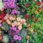 Keep Your Garden Looking Great with Fall-Blooming Annuals