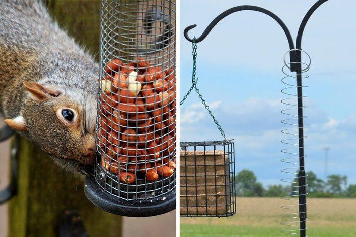 Squirrel Slinky Hack Qt 1200x800