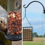 How to Keep Squirrels Away from Bird Feeders Using a Slinky