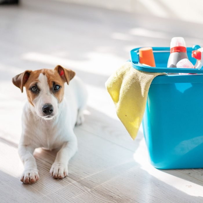 a dog on the floor with floor cleaning supplies