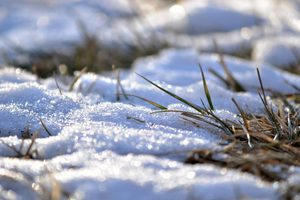 How to Take Care of Winter Weeds