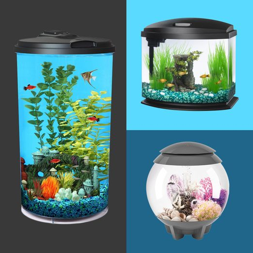 The Best Fish Bowls and Tabletop Fish Tanks of 2021